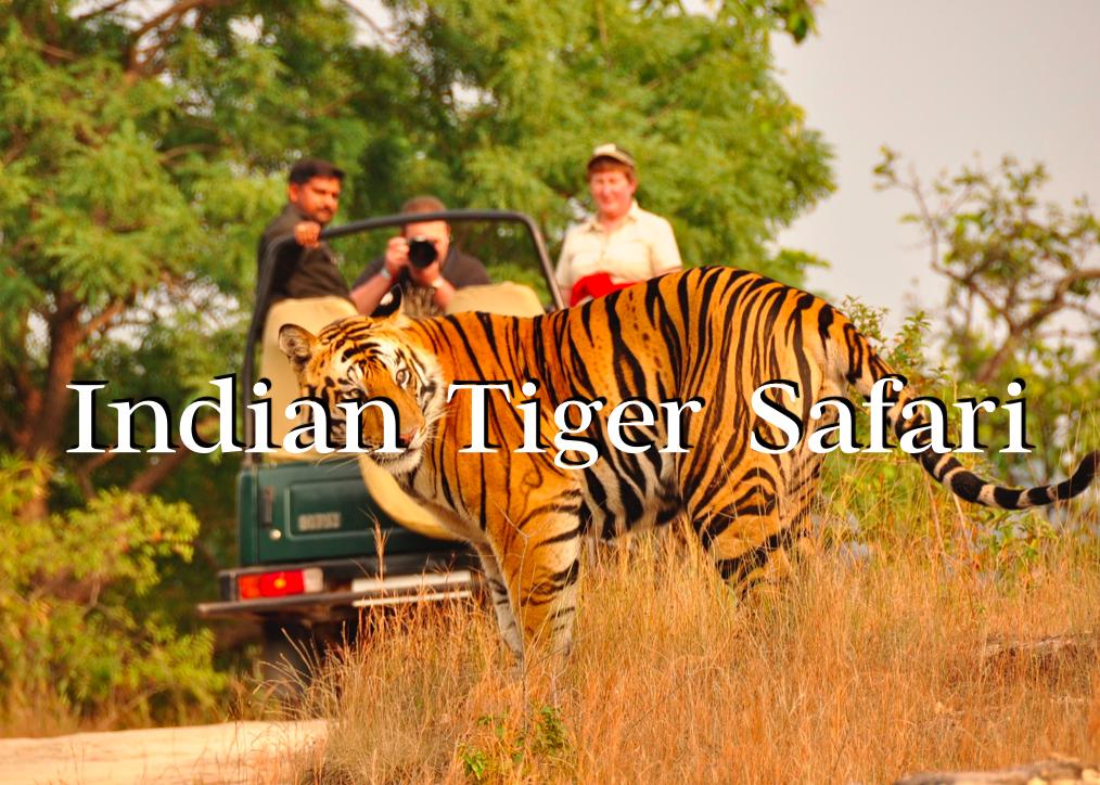 Indian Tiger Safari